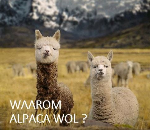 wat is alpaca